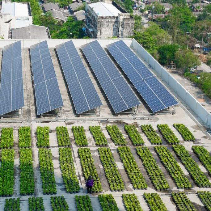 Rooftop with commercial scale solar and green